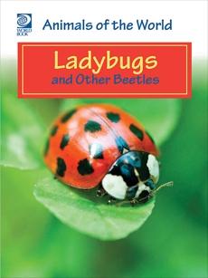 Ladybugs and Other Beetles, World Book