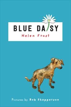 Blue Daisy, Frost, Helen