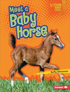 Meet a Baby Horse, Silverman, Buffy