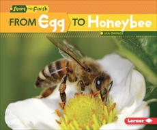 From Egg to Honeybee, Owings, Lisa