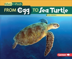 From Egg to Sea Turtle, Owings, Lisa