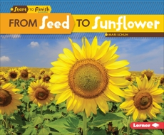From Seed to Sunflower, Schuh, Mari