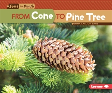 From Cone to Pine Tree, Carlson-Berne, Emma