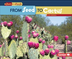 From Seed to Cactus, Owings, Lisa