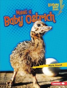Meet a Baby Ostrich, Powell, Marie