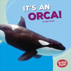It's an Orca!, Schuh, Mari