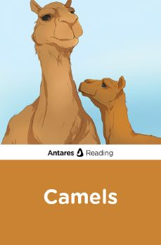 Camels, Antares Reading