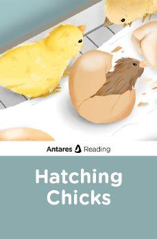 Hatching Chicks, Antares Reading