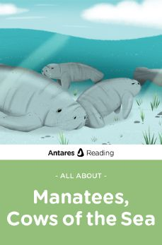 All About Manatees, Cows of the Sea, Antares Reading