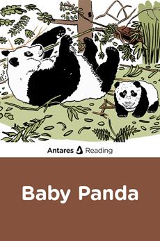 Baby Panda, Antares Reading