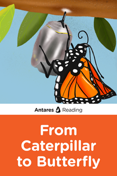 From Caterpillar to Butterfly, Antares Reading