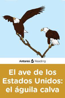 El ave de los Estados Unidos: el águila calva, Antares Reading